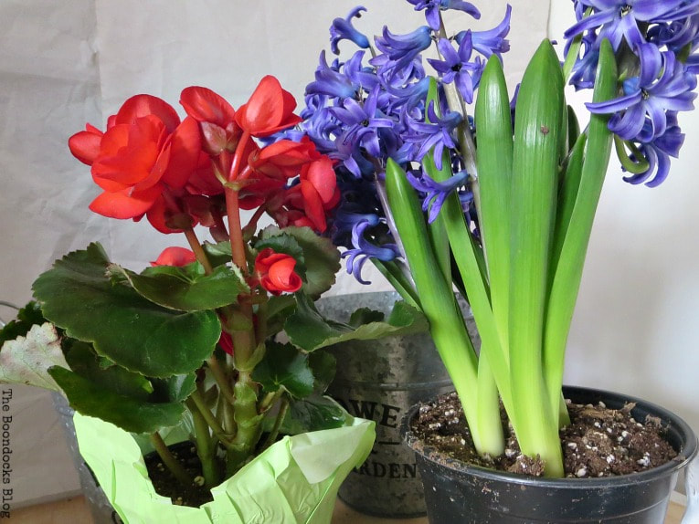 Real flower plants, Begonia and Hyacinth, How to Fake A Green Thumb with this Planter Box Idea, www.theboondocksblog.com