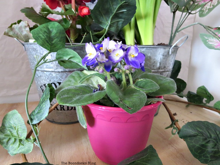 Violet plant in plastic pot, How to Fake A Green Thumb with this Planter Box Idea, www.theboondocksblog.com