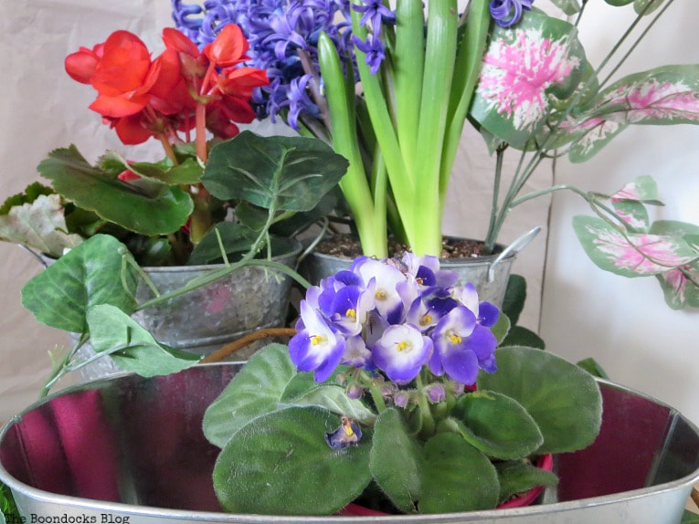 Violet placed into an oval shaped planter, How to Fake A Green Thumb with this Planter Box Idea, www.theboondocksblog.com