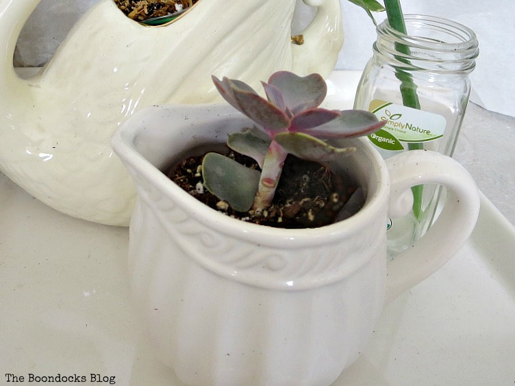 Succulent planted in creamer, How to Re-Purpose Household Items as Planters, theboondocksblog
