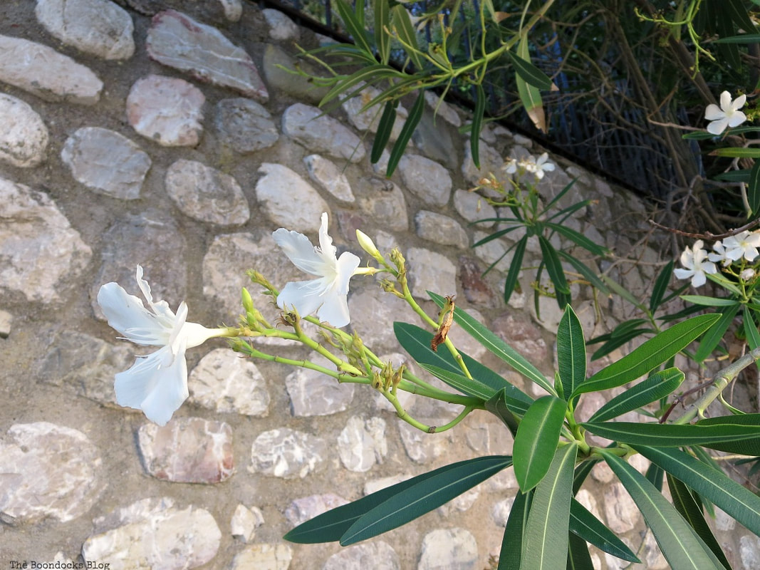 flowers in front of stone wall, A different look at the beach in Beautiful Greece www.theboondocksblog.com