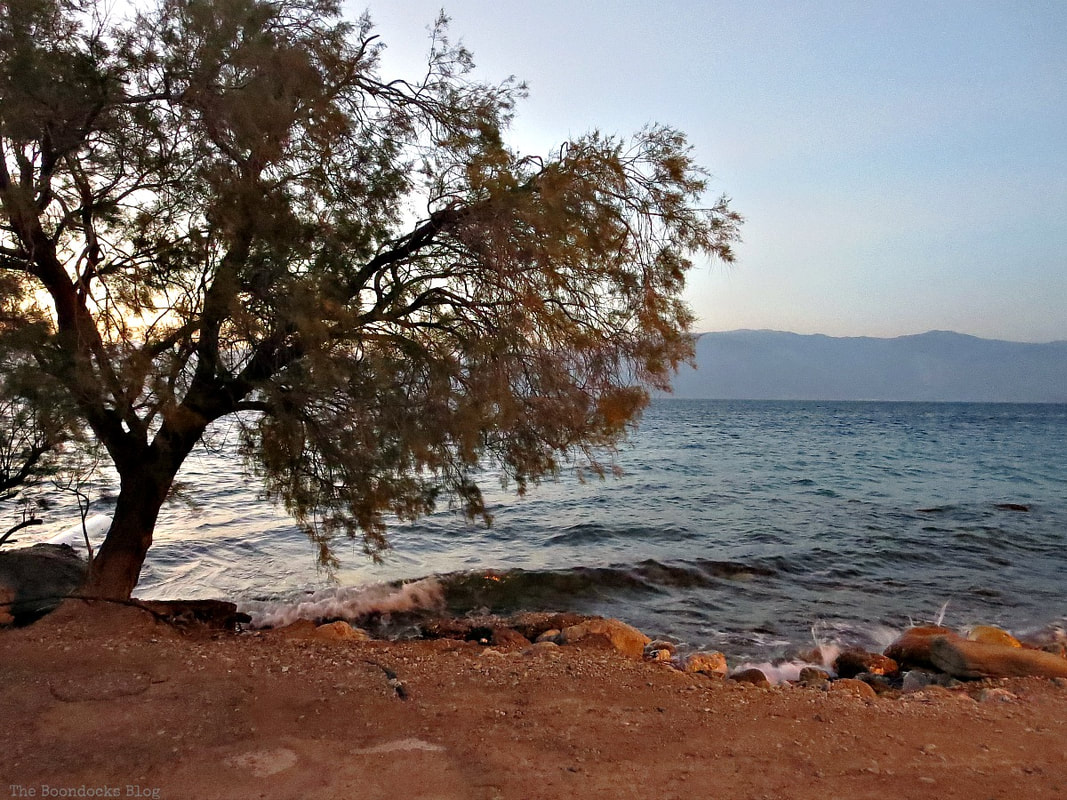 tree by the beachfront, A different look at the beach in Beautiful Greece www.theboondocksblog.com