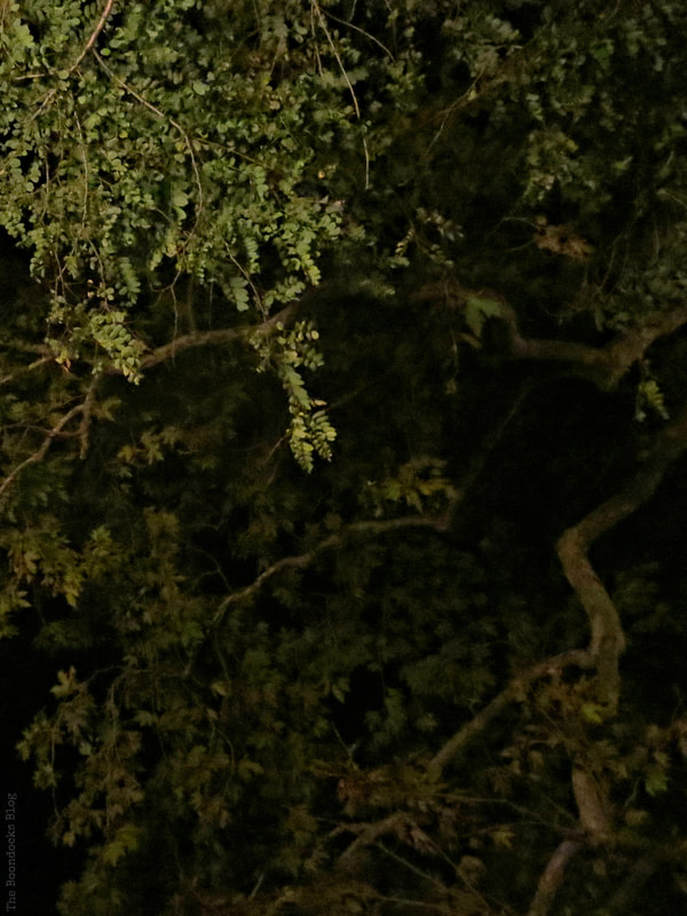 tree branches overhead at night, A different look at the beach in Beautiful Greece www.theboondocksblog.com