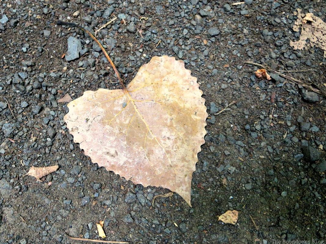 heart shaped leaf, The Greatest Botanical Garden in the World, www.theboondocksblog.com