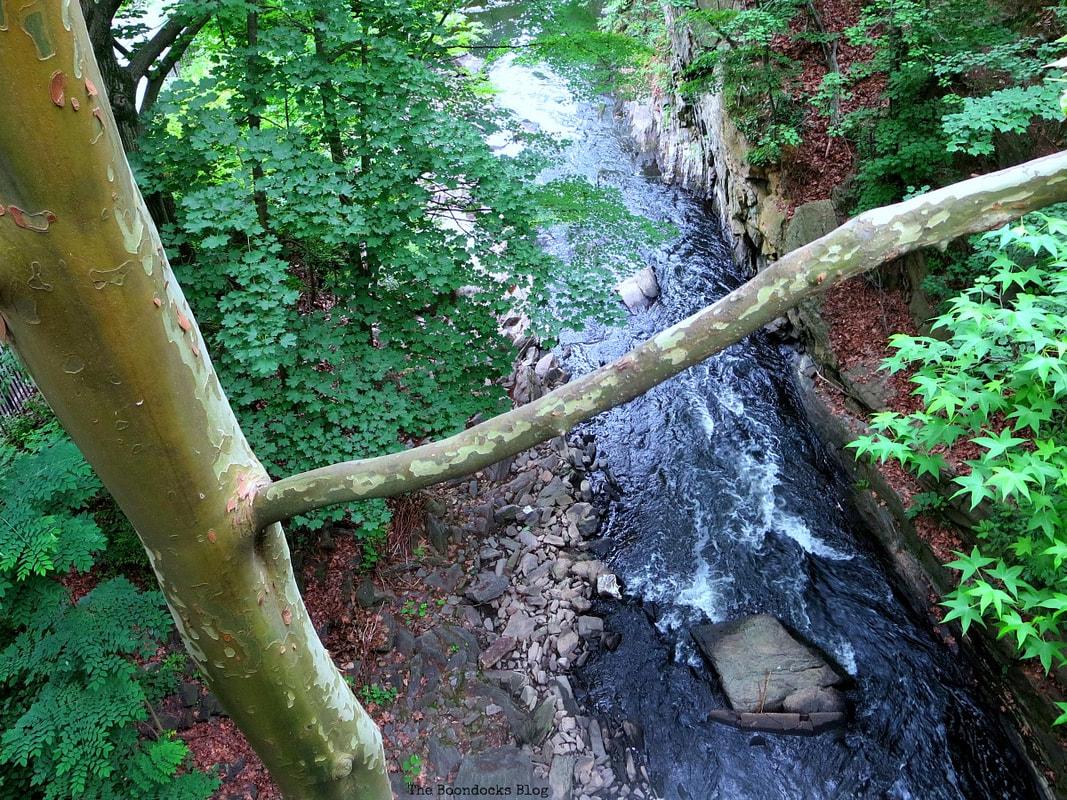 overlooking the Bronx river, The Greatest Botanical Garden in the World, www.theboondocksblog.com