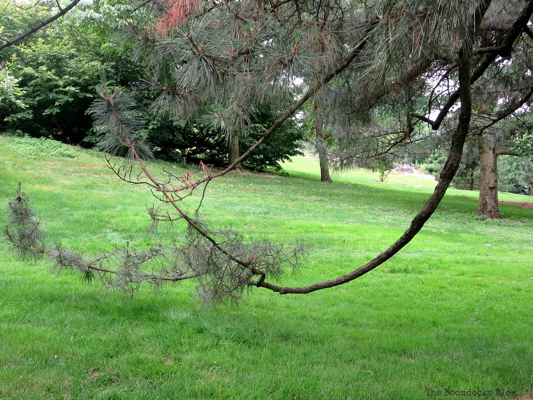 Tree with low lying branches, The Greatest Botanical Garden in the World, www.theboondocksblog.com
