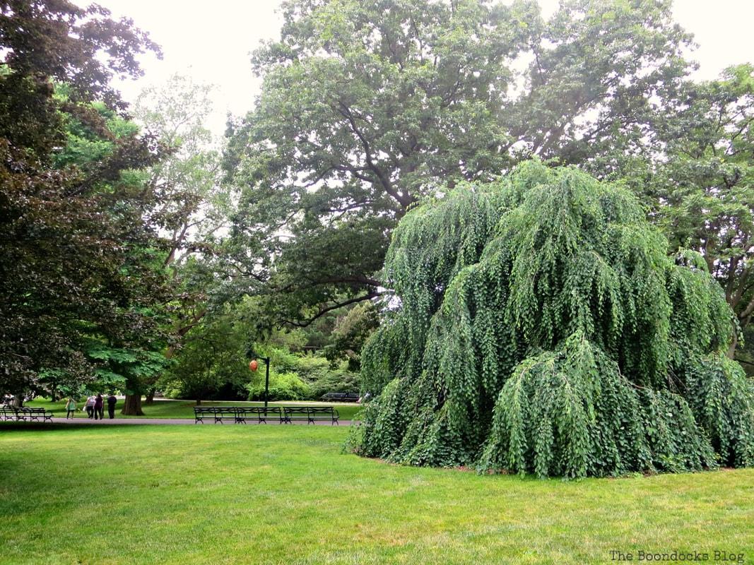 various trees, The Greatest Botanical Garden in the World, www.theboondocksblog.com