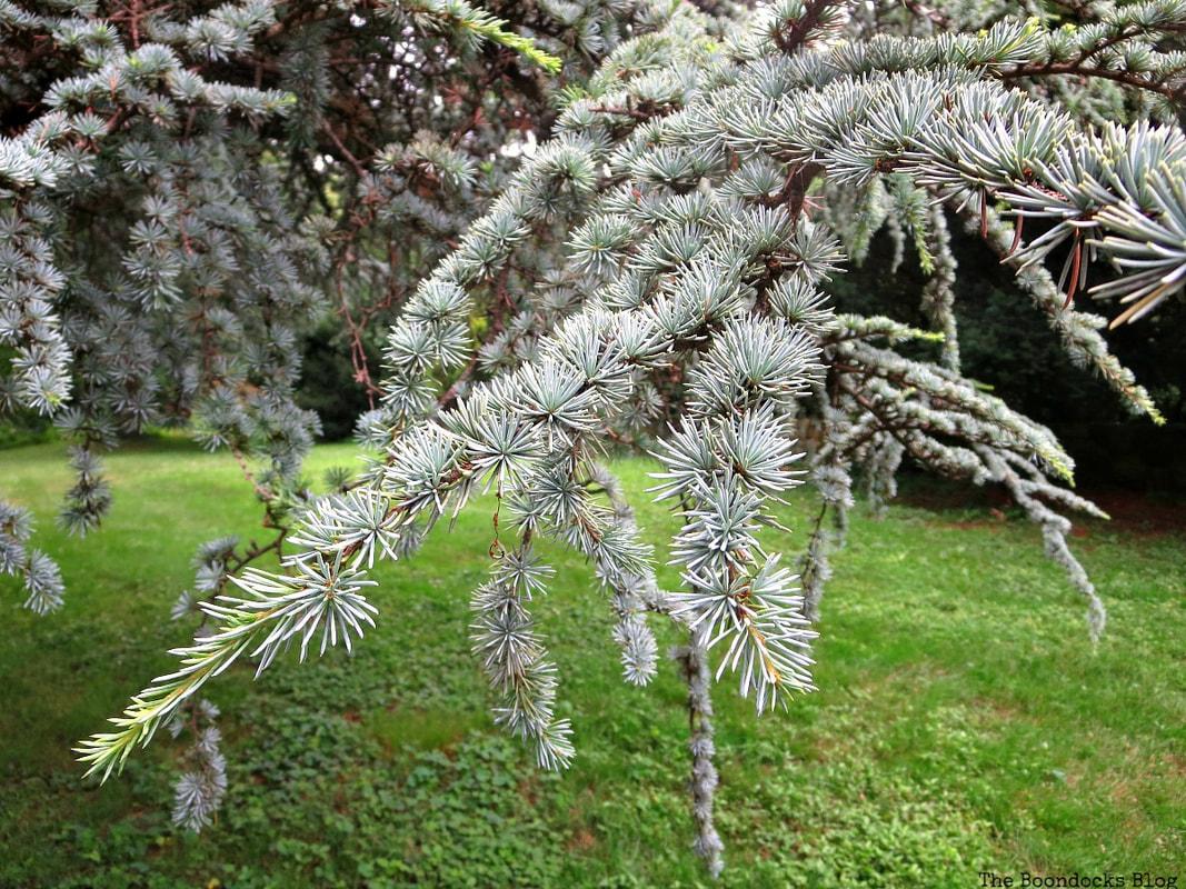 detail of fir tree, The Greatest Botanical Garden in the World, www.theboondocksblog.com