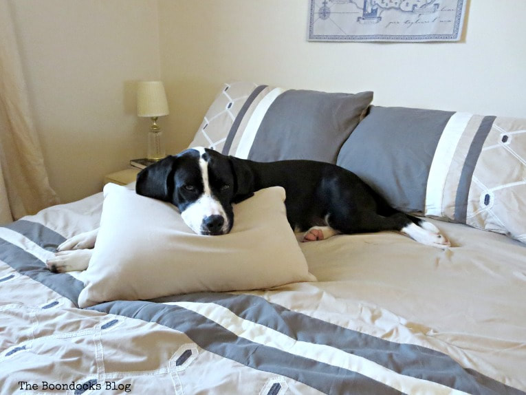 Dog on bed, How to Create a Calm Look for a Bedroom www.theboondocksblog.com