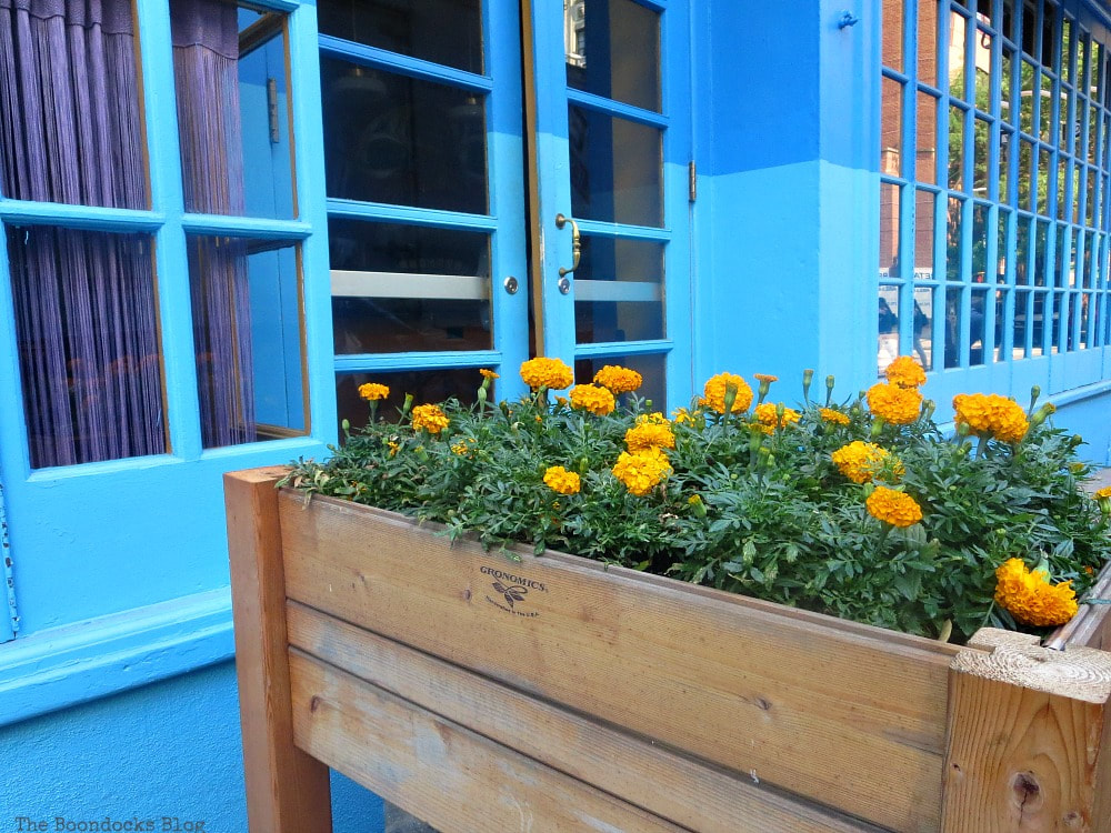Blue storefront with marigolds, A monumental Surprise at Hudson Square in New York, www.theboondocksblog.com