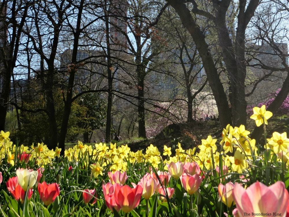 Central Park in Bloom, Four Year Blog Anniversary and an Important Lesson Learned www.theboondocksblog.com